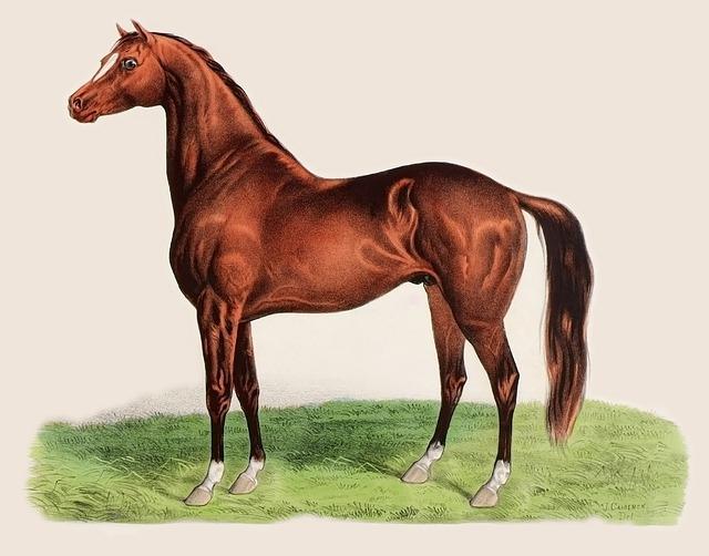 Lithografie eines Pferdes